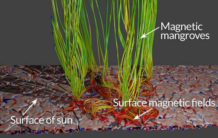 Modèle complet illustrant une fine couche de plasma en ébullition, proche de la surface solaire (Surface of sun), responsable de la génération du champ magnétique (Surface magnetic fields) en surface (bleu-rouge). En émergeant sous forme de tubes de lignes de champ (en vert), il crée une « végétation » rappelant une mangrove (Magnetic mangroves), ce qui permet le chauffage des diverses couches de l'atmosphère solaire. © Tahar Amari / Centre de physique théorique.
