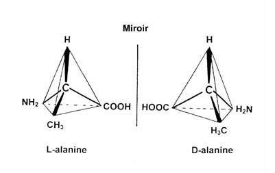Figure 1. La plupart des acides aminés existent sous deux formes, images l'une de l'autre dans un miroir. Les protéines n'utilisent que la forme L (gauche). © DR