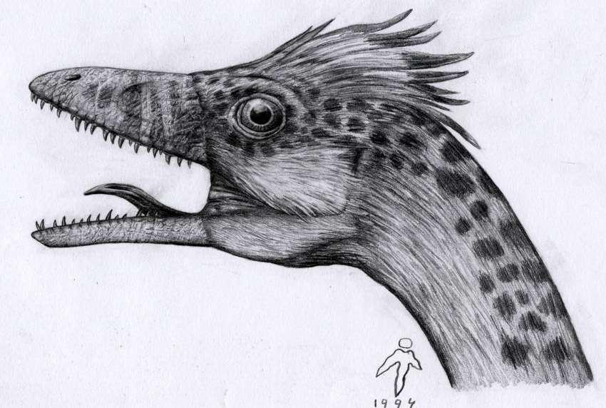 Un compsognathus mâle. © Michel Fontaine