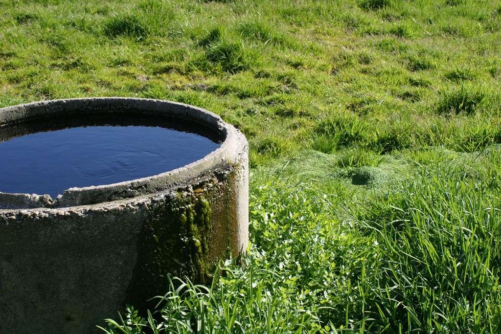 Certains Escherichia coli pathogènes peuvent résister pendant 245 jours dans les déchets organiques qui sédimentent au fond d'un réservoir d'eau et sont en mesure de contaminer les veaux âgés de 10 semaines qui viennent s'y désaltérer. © Vincent Leclerc