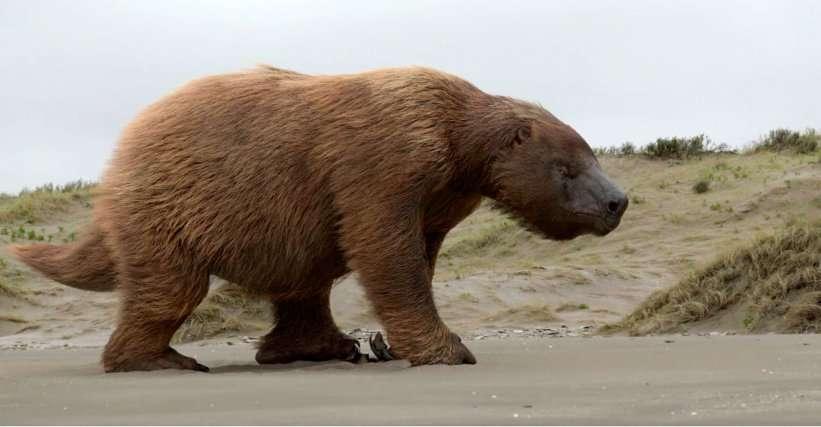 Le paresseux géant du genre Megatherium vivait en Amérique du Sud jusqu'à la fin du Pléistocène et rivalisait en taille avec les éléphants actuels. © Le Mystère des Géants Disparus, French Connection Films