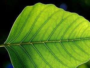 Quelles règles régissent la formation des nervures et le motif qu'elles arborent ? (Crédits : Jon Sullivan/pdphoto.org)
