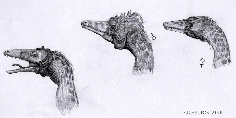 À quoi pouvait bien ressembler le compsognathus, ce petit théropode du Sud de la France ? © Michel Fontaine