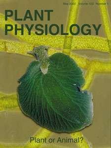 Elysia chlorotica et son apparence de feuille, une plante ou un animal ? © Plant Physiology