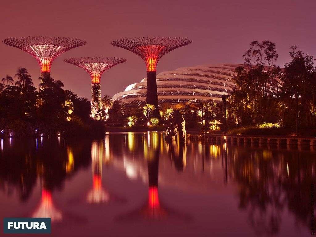 Singapour : « Gardens by the Bay » un modèle de biodiversité, de technologies vertes