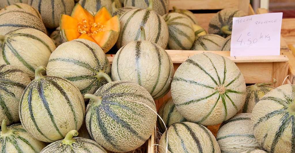 Melons sur un étal de marché. © Jayne Duncan, Shutterstock