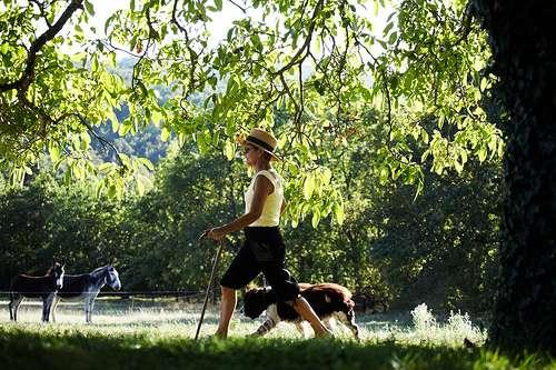 La marche à pied est d'autant plus bénéfique pour la pression systolique et le rythme cardiaque qu'elle est effectuée en forêt. © Tourisme Vézère, Matthieu Anglada, Flickr, CC by-nc-sa 2.0