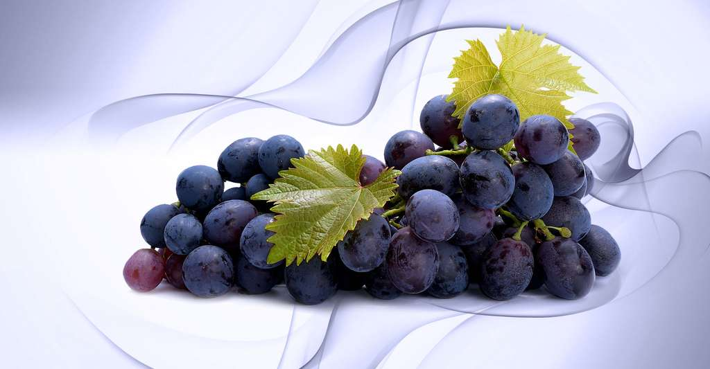 Des grappes de raisin. © Adrian Ciurea, Shutterstock