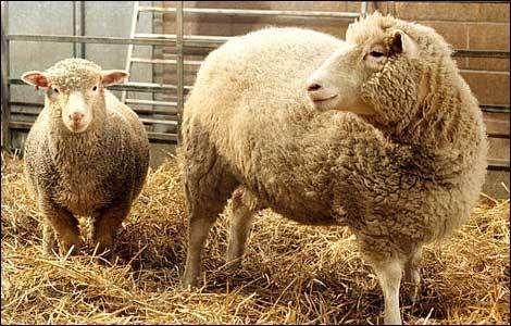 Du clonage animal au clonage thérapeutique humain, quelle est la limité éthique ? © DR
