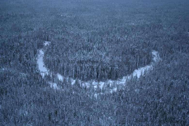 Vue d'hélicoptère des forêts