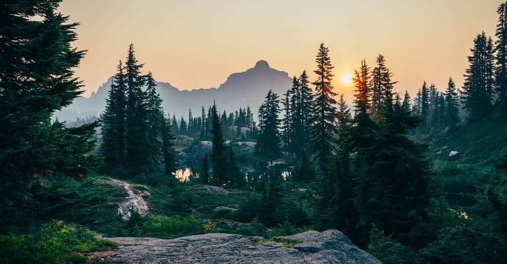 Tout le monde s'accorde sur l'importance de protéger les forêts existantes qui abritent une grande part de la biodiversité de notre planète. © Sergei Akulich, Unsplash