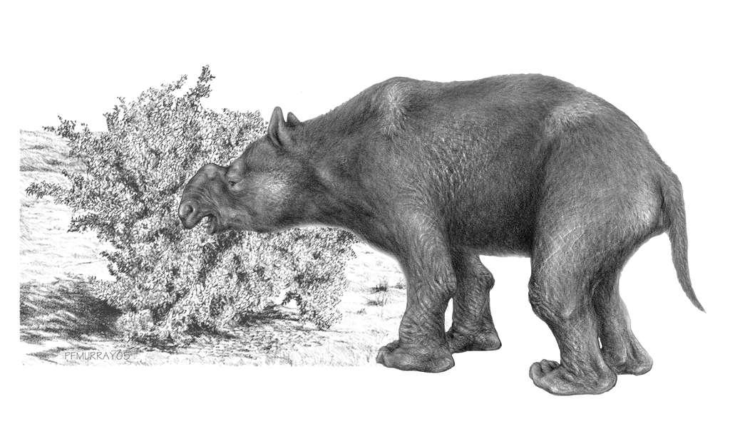 Le diprotodon était le plus grand marsupial. Sa taille était plus grande que celle d'un humain. © Peter Murray