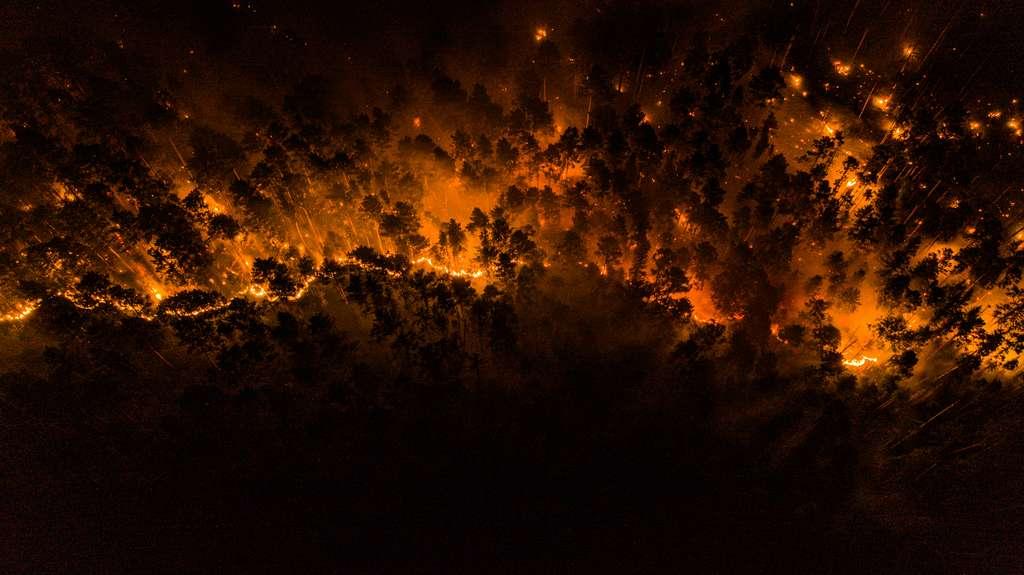Les incendies ravagent la région de Krasnoïarsk en Sibérie. © Greenpeace