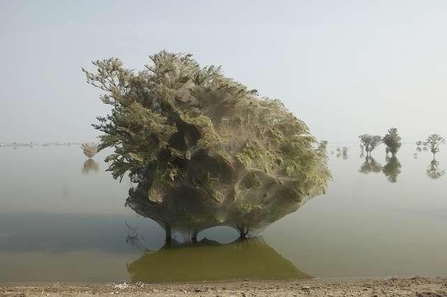 En décembre dernier, quatre mois après les inondations, certains arbres avaient toujours les pieds dans l'eau ! © DFID, Flickr, CC by 2.0