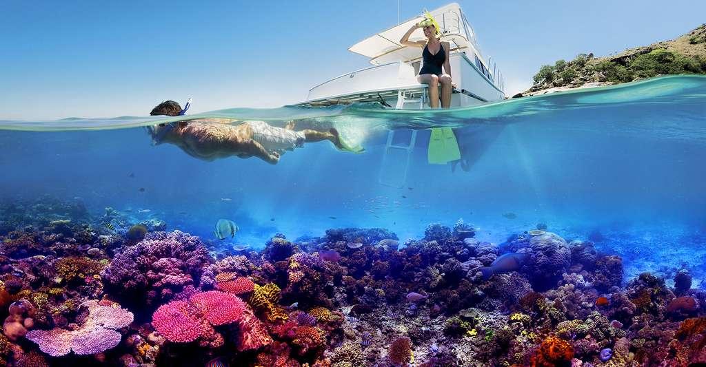 Snorkelling sur la grande barrière de corail© WT-shared GFDL / CC BY-SA 4.0
