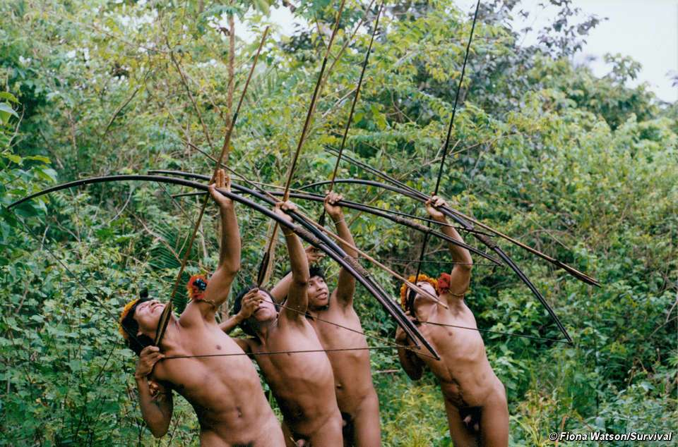 Hommes awás chassant dans la forêt. © Fiona Watson, Survival