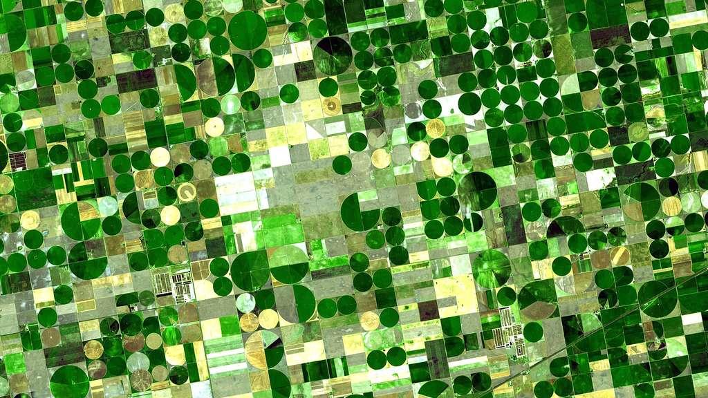 Cultures céréalières dans le Kansas, vues depuis l'espace