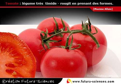 Tomate légume timide