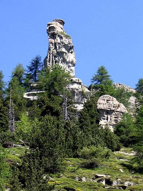 Forêt des Hautes Alpes. © GNU FDL 1.2