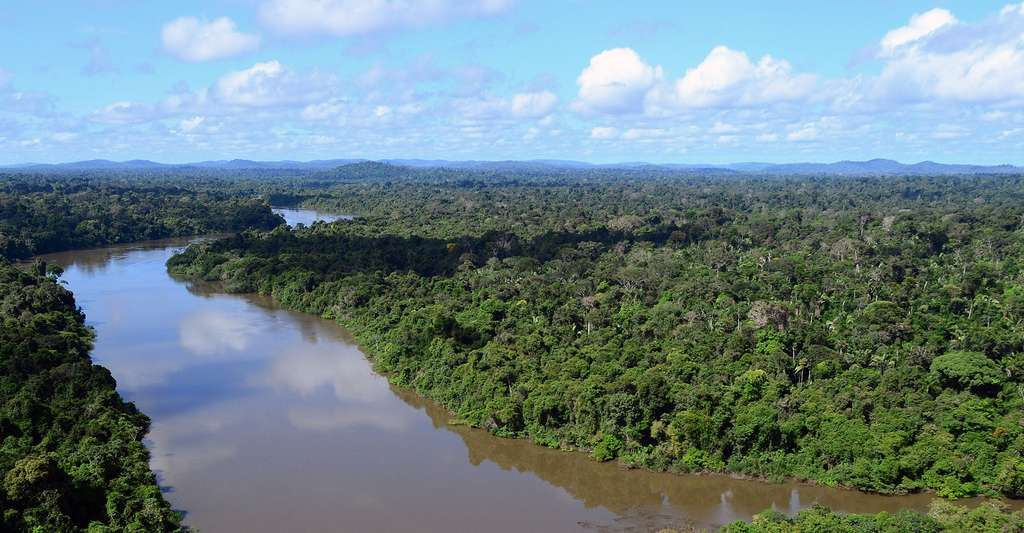 Vue sur le fleuve Amazone. © Ibama, Wikimedia commons, CC by 2.0