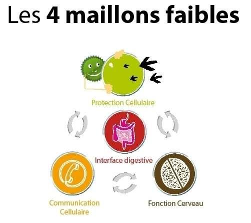 Les quatre « maillons faibles » représentent les déséquilibres nutritionnels qui affectent le bon fonctionnement des différents tissus. © De Boeck