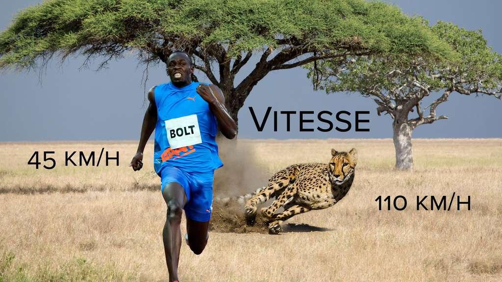 Vitesse : le guépard champion du sprint