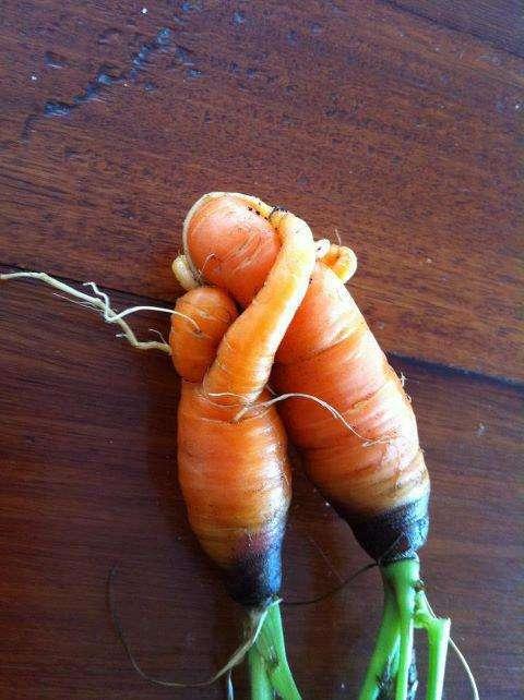 Des carottes étonnantes