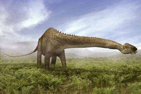 Un diplodocus. © DR