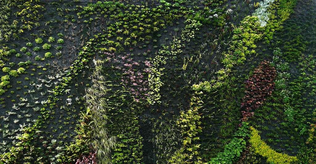 Les non-tissés sont une nouvelle génération de textiles. Ici, gros plan sur un mur végétal monté sur un géotextile. © Virginia Manso, CC by-nc 2.0