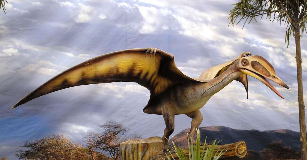 Pterosauria. © HombreDHojalata, CC BY-SA 3.0
