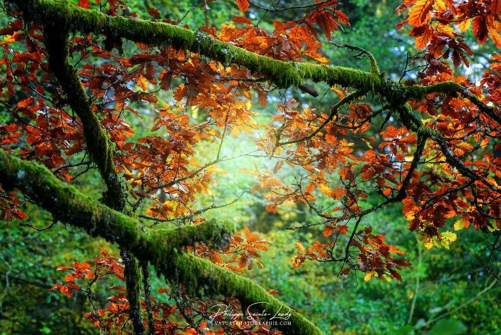Lumière d'automne perçant les feuillages