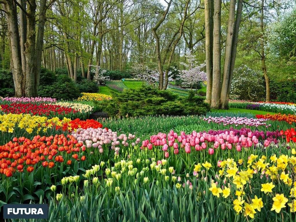 Le Keukenhof, parc floral avec plus de 7 millions de bulbes en fleur
