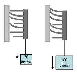 Lorsque les contraintes mécaniques, pression ou traction, augmentent, le nombre de microfibres mises en jeu dans l'adhésion augmente aussi. Crédit : Ronald Fearing