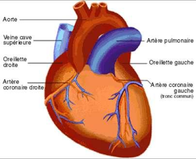 Cliquez sur l'image pour accéder au dossier © Fédération française de cardiologie
