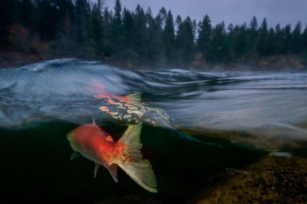 « Matin brumeux sur la rivière Adams ». © Eiko Jones, Ocean Art Competition 2018