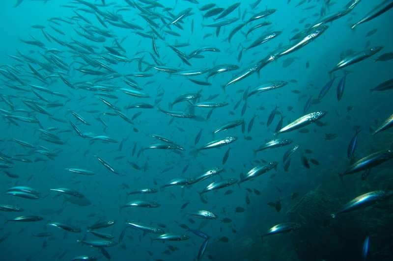 Les récifs artificiels : quels avantages pour la pêche ? © DR