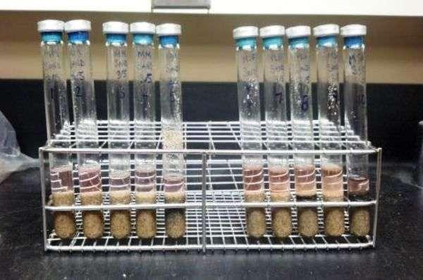 Une des expériences menées dans des tubes avec des bactéries méthanogènes soumises à des cycles de congélation et de décongélation. © Rebecca Mickol