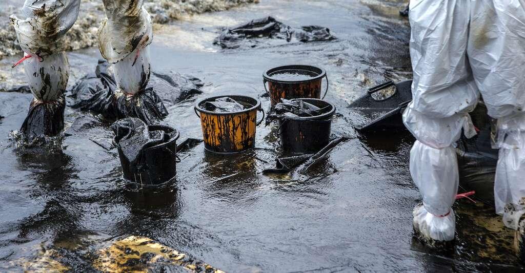 À chaque marée noire, les hommes se mobilisent pour nettoyer les dégâts. © jukuraesamurai, Fotolia