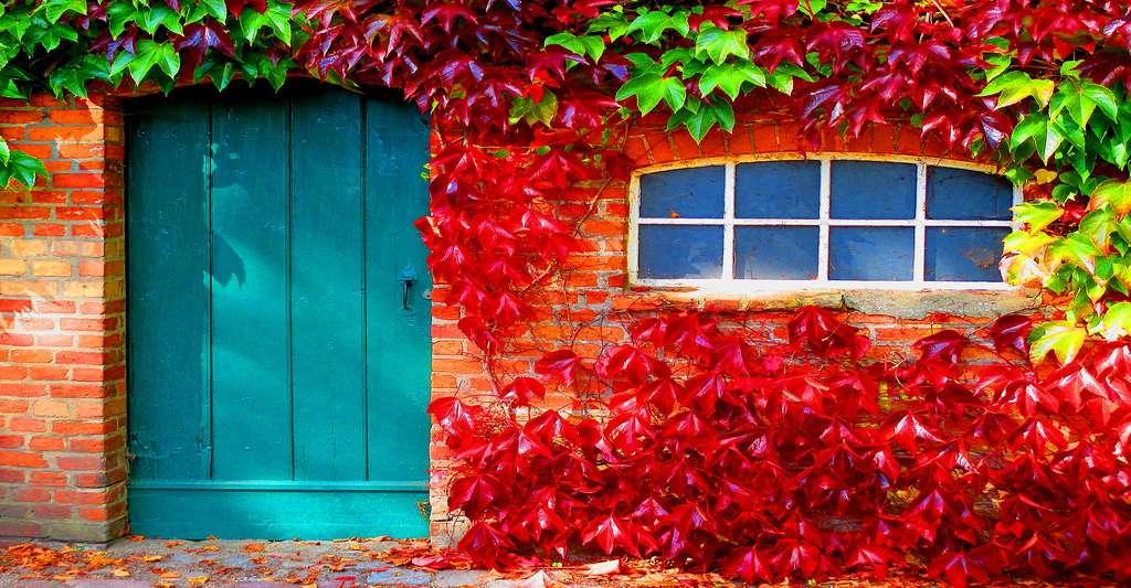 Couleurs d'automne. © Ladybugkreativ, CCO