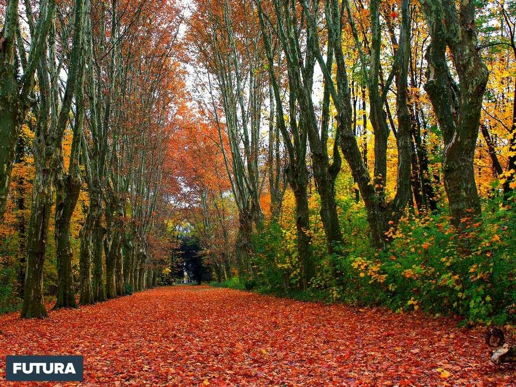 Les sublimes couleurs de l'automne