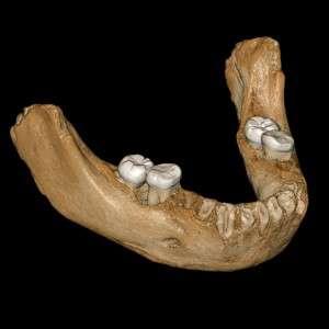 Cette illustration montre la reconstruction virtuelle d'une mandibule trouvée dans la grotte de Baishiya, à Xiahe, dans la province chinoise du Gansu. © Jean-Jacques Hublin, The Max Planck Institute for Evolutionary Anthropology, AFP