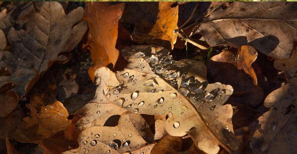 Qu'est-ce qu'un compost bio ? Ici des feuilles mortes en automne. © Jackmac34, Pixabay, DP