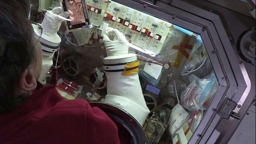 L'astronaute Peggy Whitson menant des expériences sur les cellules souches cardiaques. © Nasa