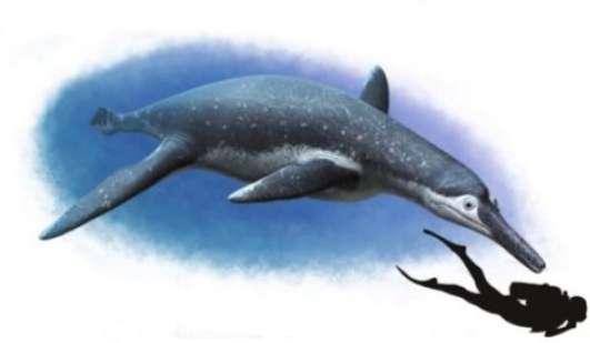 Une représentation possible du pliosaure Luskhan itilensis qui vivait dans les eaux douces, au Crétacé. On remarque les quatre grandes nageoires. © Andrey Atochin