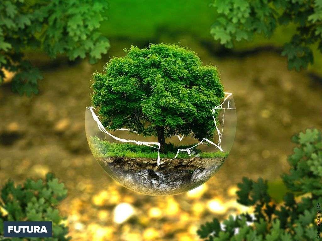 Protéger la biodiversité et les écosystèmes pour l'avenir
