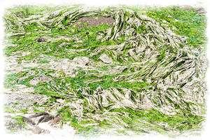 Lorsqu'elles se décomposent, les algues vertes dégagent une odeur d'oeufs pourris des plus désagréables. © Ludo29880 CC by-sa