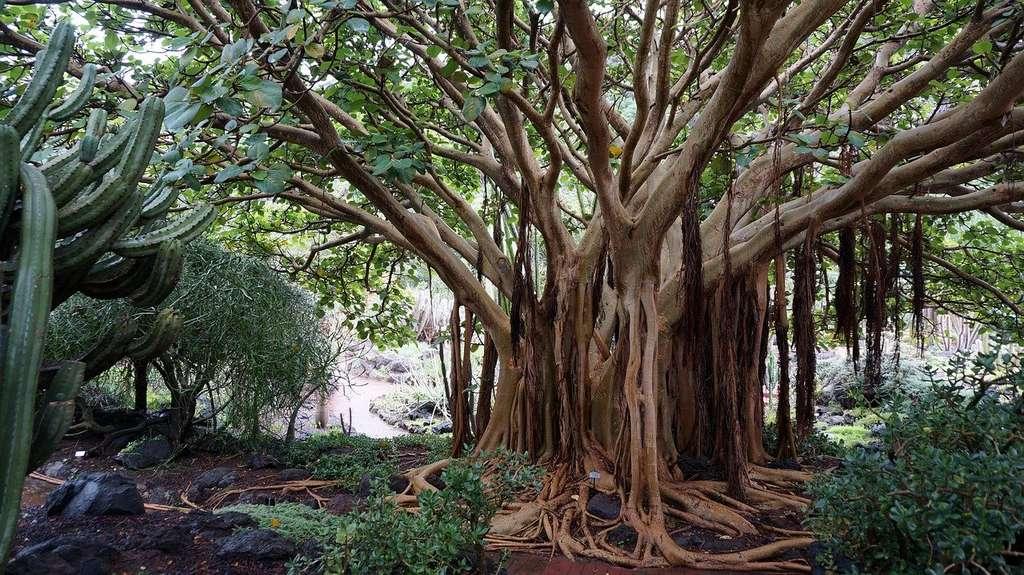 Cet arbre stocke du carbone depuis plusieurs siècles, dans et sur le sol. © Moniek58, Pixabay, DP