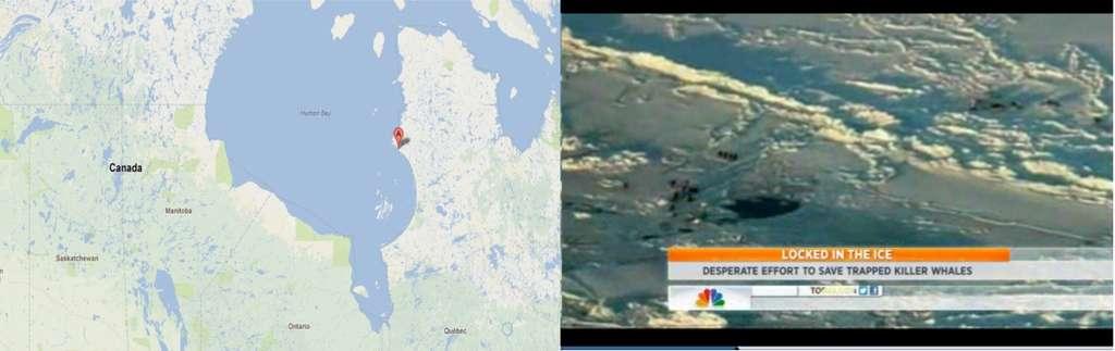 La baie d'Hudson est située au nord du Canada. Sur l'image de gauche, le point A montre le village d'Inukjuak, non loin de la zone où les orques ont été découvertes. L'image de droite montre une vue d'hélicoptère de la minuscule zone d'eau libre où les 11 orques étaient piégées. © Google Maps, NBC