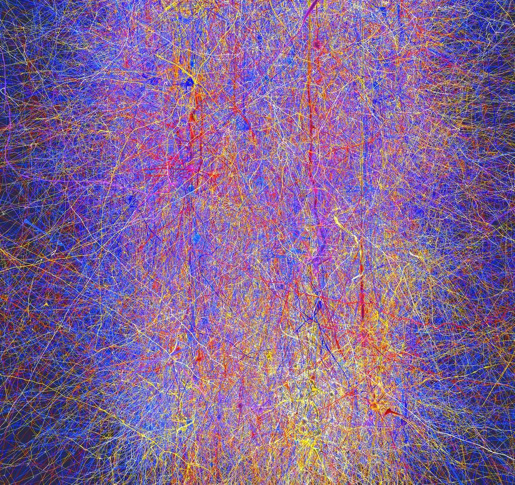 Une simulation partielle d'un cerveau de rat, obtenu lors d'une phase préliminaire du HBP, en 2008. La simulation contenait 10.000 neurones virtuels connectés entre eux par 30 millions de synapses et des kilomètres de fibres. Elle n'est pourtant que la reconstitution d'une seule colonne corticale, l'unité de base du cortex constituée de milliers de neurones. © EPFL