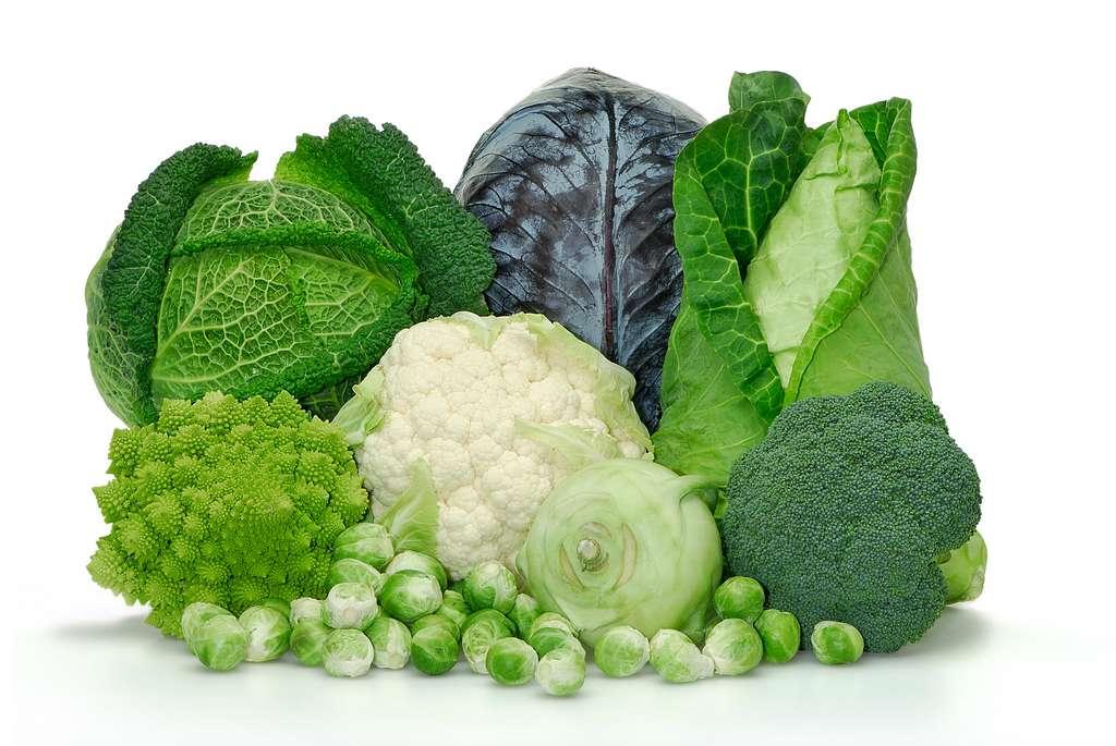 Les Brassicacées sont une grande famille de végétaux qui comptent, entre autres, les choux. © Wolfgang Jargstorff, Adobe Stock